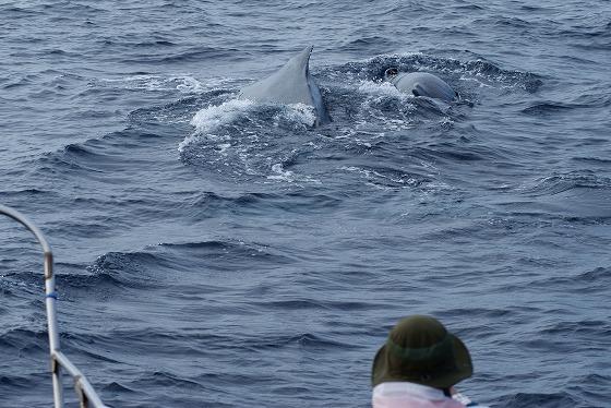 1601311529鯨連続-12