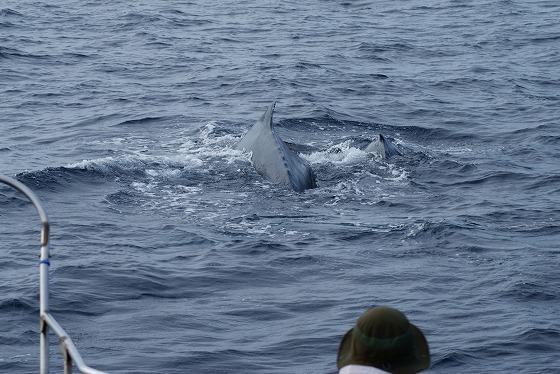 1601311529鯨連続-13