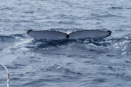1601311529鯨連続-15