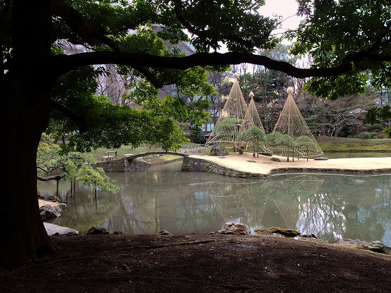 160222小石川後楽園-0