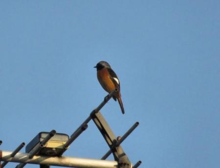 紋付鳥 072