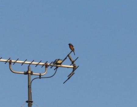 紋付鳥 071