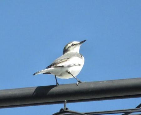 紋付鳥 039
