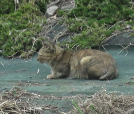 猫・ジョウビタキ 043