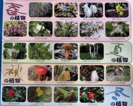 小岱山の花 004