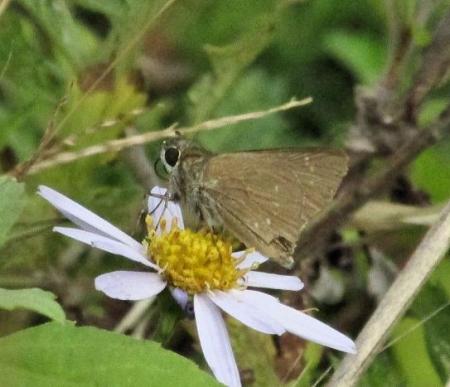 下田の渡し蝶 065