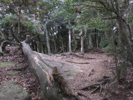 天童岩・吉野ケ里 133