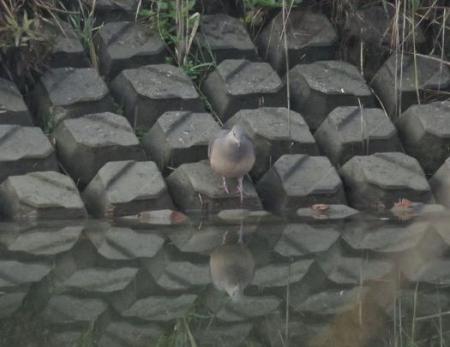 野良猫・野鳥・猿 073