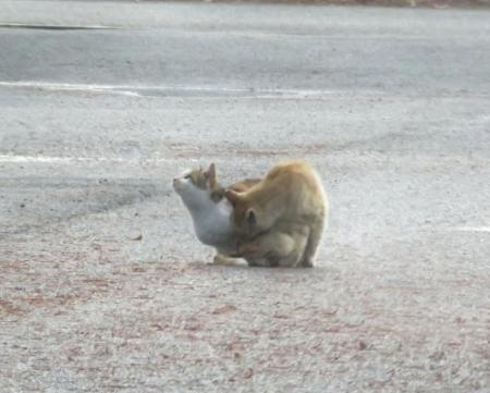 野良猫・野鳥・猿 063