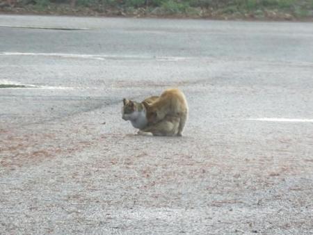 野良猫・野鳥・猿 062