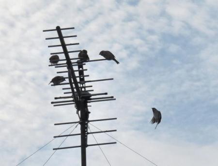 天気予報と百舌鳥 004