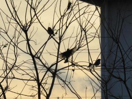 運動公園のカラス14日 雲15日 065