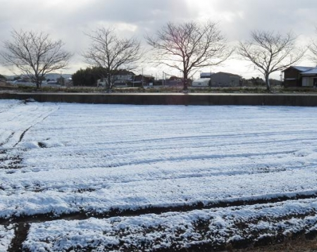 雪の朝シロハラ 012
