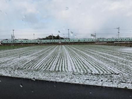雪の朝シロハラ 004