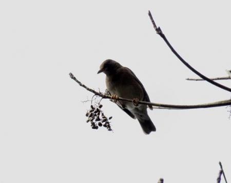 清水運動公園鳥 029