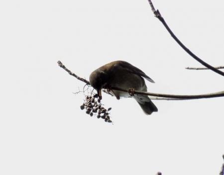 清水運動公園鳥 028
