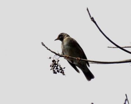 清水運動公園鳥 027