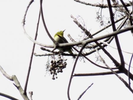 清水運動公園鳥 032