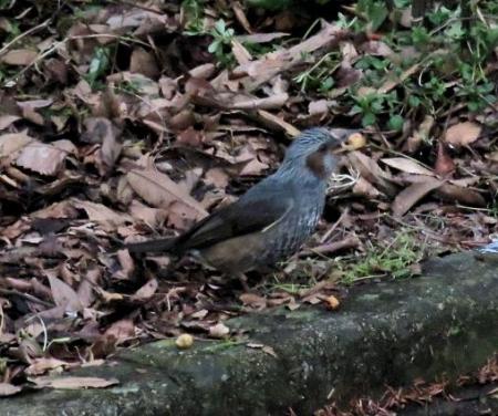 清水運動公園鳥 091