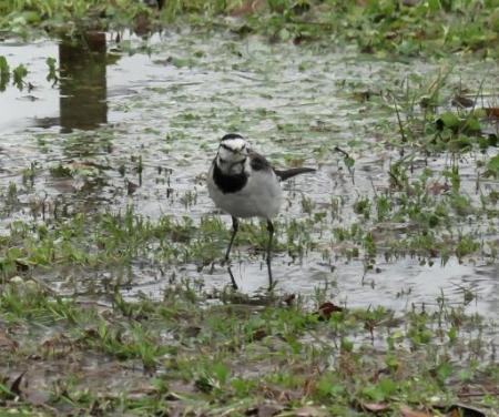 清水運動公園鳥 058