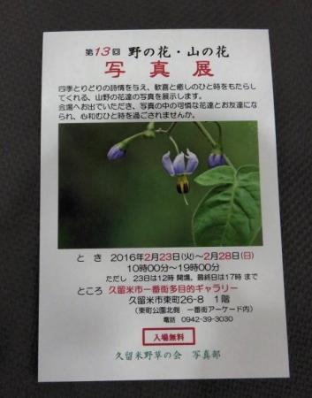 花の展覧会 049