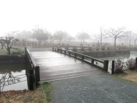 県立公園霧の朝 101