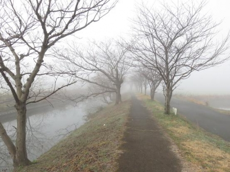 県立公園霧の朝 122