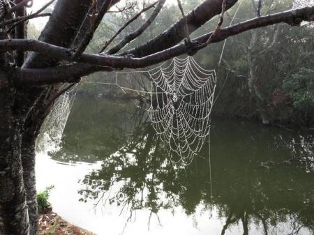 県立公園霧の朝 118
