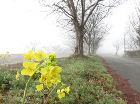 県立公園霧の朝 168