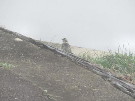 県立公園霧の朝 157