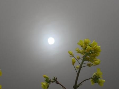 県立公園霧の朝 149