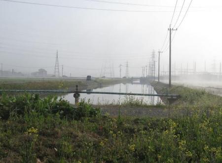 県立公園霧の朝 199