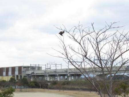 新船小屋と風浪公園のアトリ 039