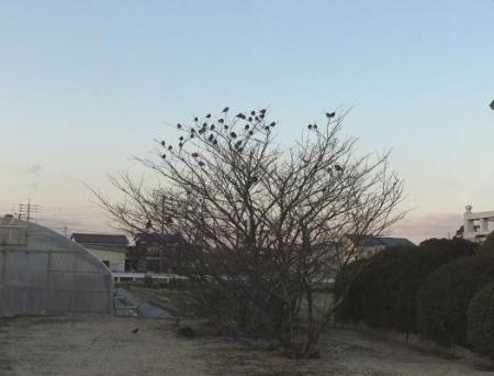 新船小屋と風浪公園のアトリ 060