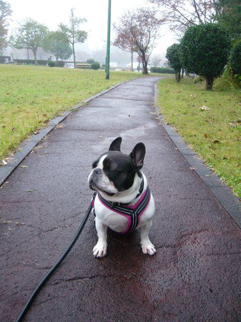 雨だ。。。