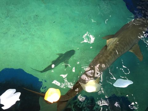 危険な鮫の上
