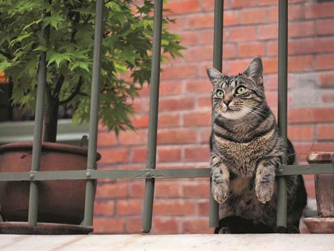『世界ネコ歩き』