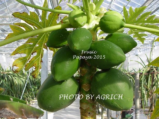 papaya123