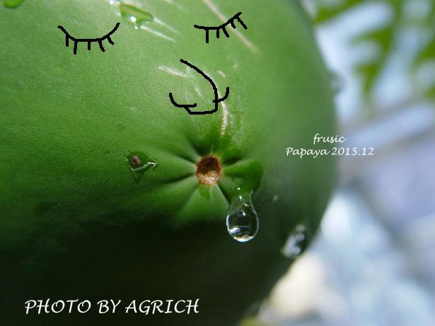 papaya456