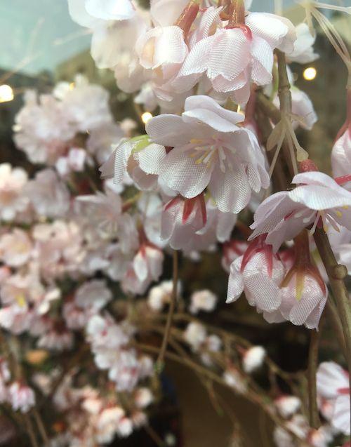 3月7日桜アップ
