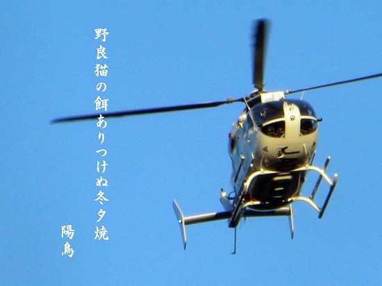 ku2519.jpg
