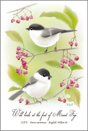 コガラまゆみ野鳥ポストカード