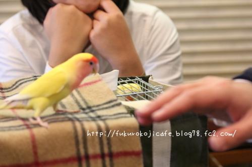 きゅーちゃん&こちび1