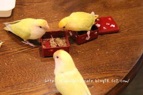 黄色い仔3羽お重