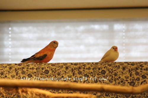 2羽の距離