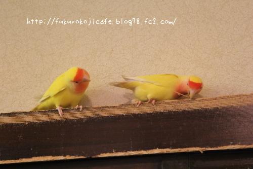 そっくり2羽2