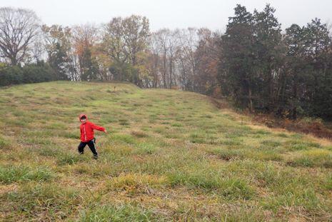 草原と雑木林