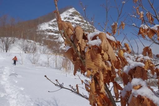 「雪の中でも葉を落とさない強靭さ」