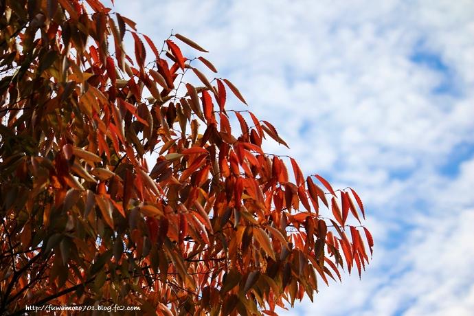 チビプードルモコの毎日☆紅葉
