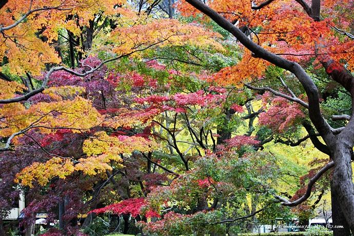 チビプードルモコの毎日☆日比谷公園B